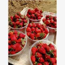 萊蕪哪里賣草莓苗