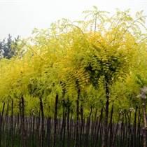 供隴南綠化苗木和甘肅苗木報價