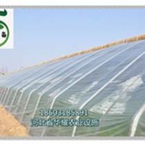 溫室潮汐苗床/底部灌溉育苗床供應商