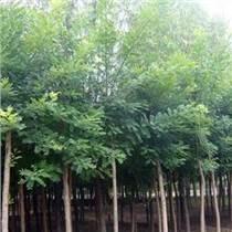 供西北苗木和隴南荒山綠化苗木認準苗木