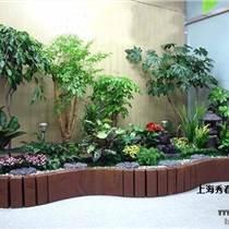办公室植物租赁 植物花卉租赁 植物租赁 秀春供