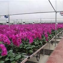 青州花卉苗床/潮汐灌溉養花種植應用廣泛