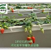 河北省溫室大棚無土栽培草莓種植