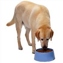 新型狗粮加工设备厂家-让狗粮生产变得如此简单