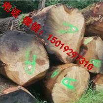 尚高木業供應AB級法國白橡原木質量圓又直好貨