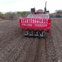 高效率移栽機 助力農業發展