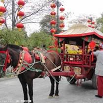 广州骑乘马价格