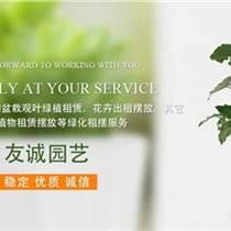 无锡办公室植物养护电话 无锡办公室植物养护 无锡办公