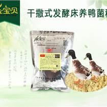 冬季蛋鸭不产蛋的原因和解决办法