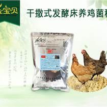 怎样饲养生态环保散养柴鸡