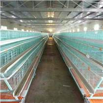 鸡笼厂 全自动鸡笼 蛋肉鸡育雏鸡笼 饮水上料集蛋清粪