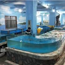 酒樓海鮮魚池怎么養魚,養殖魚池怎么維護護理,海鮮池