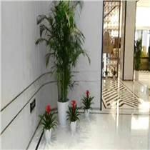 上海花卉出租热线 花卉出租公司哪家好 花卉出租 卉萱