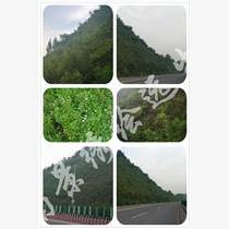 植被恢复原则 挂网客土喷播 矿山修复工程研究中心河南