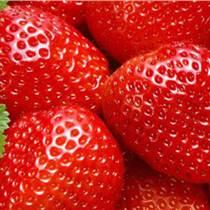 山東大棚草莓苗哪家好