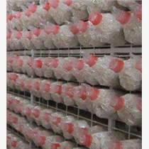 食用菌網格架廠家