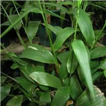 廠家供應  淡竹葉提取物10:1   可代加工固體飲