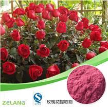 玫瑰花提取物 玫瑰多酚 可代加工固體飲料 壓片糖果