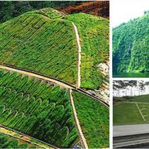 河南景绣边坡绿化方案 园林绿化工程施工 道路边坡绿化