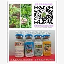 蔬菜瓜果病毒病進入高發期,這樣防治有特效