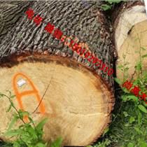 尚高木業到青島港口的1000立方白橡原木