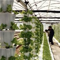 石家莊無土栽培蔬菜