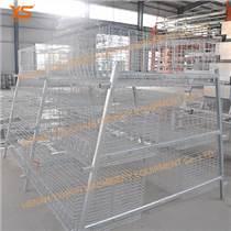 肉雞籠 自動化養雞設備 階梯式肉雞籠