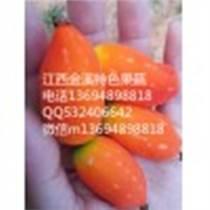 供應最新養生水果紅參果苗的開發基地