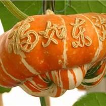 香爐瓜種子,福瓜種子,貨真價實,物美價廉