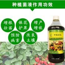 芽苗菜益生菌栽培绿豆芽苗防腐烂促生长绿色健康