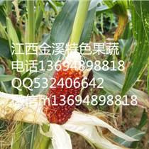 供應酷似草莓小巧玲瓏玉米種子批發