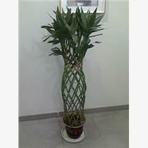常熟植物租赁 常熟绿植租赁 常熟盆栽租赁 常熟花木租
