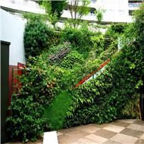 承德室内植物墙设计施工
