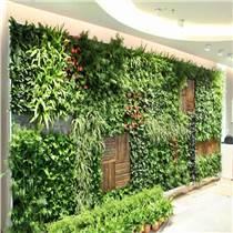 北京植物墻效果圖
