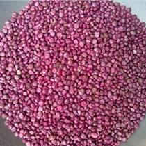 南北均可种植的优质牧草 甜高粱种子进口批发