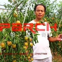 冬棗褪青增甜葉面肥廠家直銷 冬棗專用葉面肥價格