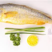 穗乐鲜黄花鱼,鲜活海鲜 黄花鱼 水产批发,宁德大黄鱼