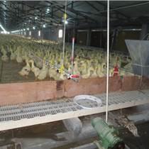 如何選鵝用網床 養鵝專用漏糞板 塑料家禽漏糞地板