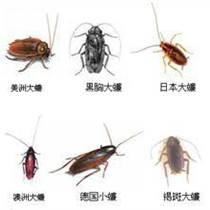 温州杀虫灭蟑螂公司 温州专业灭蟑螂 温州灭蟑螂公司哪