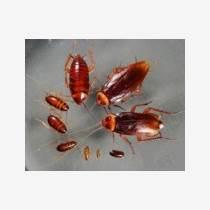温州餐厅灭蟑螂公司哪家好
