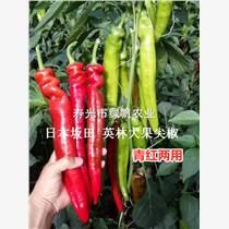 供應英林大果尖椒種子種苗  日本坂田三系雜交 羊角型