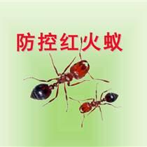 柳州红火蚁防治、灭红蚂蚁、赫鼎鸿公司灭鼠