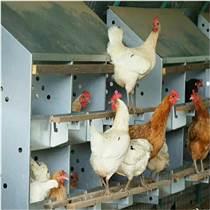 集蛋窝  塑料产蛋窝厂家  土鸡产蛋箱