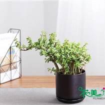 广州从化区花木租摆绿植养护报价