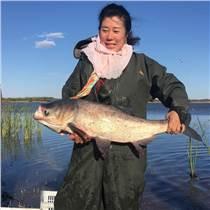 野生鱼批发零售通榆蛤蟆泡野生鱼生态有机绿色淡水野生鳙鱼