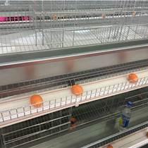 育雛籠養設備中州牧業制作 自動化集蛋系統定制