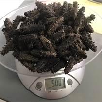 宁波海参多少钱一斤 淡干海参营养价值