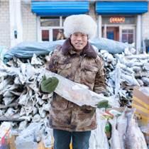 人工養殖鱘鰉魚,人工養殖鱘鰉魚多少錢一斤