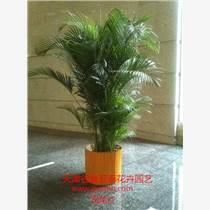 天津和平區花卉綠植銷售公司天津花卉綠植租擺公司
