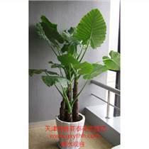 天津植物銷售公司綠植盆栽租擺公司